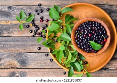 Bowl of fresh superfood MAQUI BERRY on wooden background. Superfoods antioxidant of indian mapuche, Chile. Copyspace background.Top view.