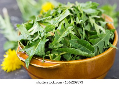 Bowl of fresh young dandelion leaves for a salad