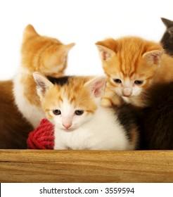 Bowl of Kitties