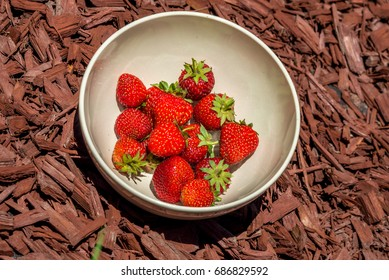 Bowl of strawberries on wood mulch background