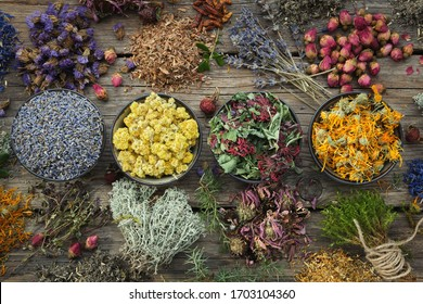 Bowls of dry medicinal herbs - lavender, coneflower, marigold, rose, Helichrysum flowers, healthy moss and lichen. Healing herbs assortment on wooden table. Top view. Herbal medicine.