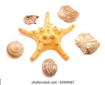 Bowls of mollusks and a starfish on a white background
