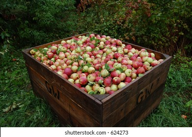 A box of apples