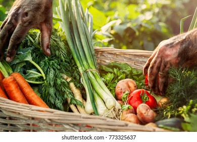 Box with fresh organic vegetables with famer hands
