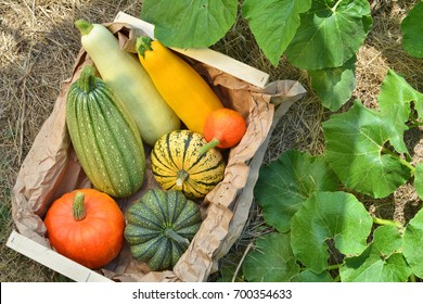 Box with fresh pumpkins and squash vegetables harvest on straw in the garden