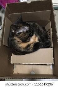 Box full of tortitude