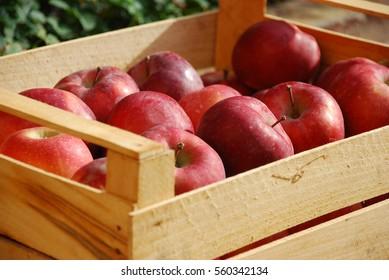 Box of juicy red apples