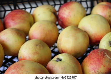 Box of ripe nectarines offered at market