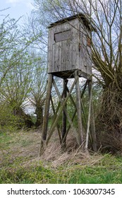 Box stand in a hedge in Nienburg in springtime