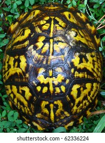 A box turtle closed up in his shell outside in the grass with room for your text.