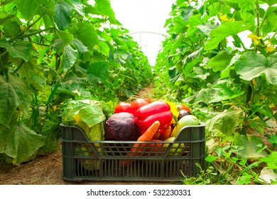 Box with vegetables in a greenhouse