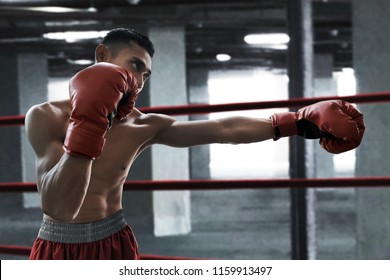 Boxer athlete training