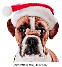 Boxer Dog with HO HO HO Bone on it's Nose Wearing Santa Hat