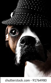 Boxer Dog wearing a hat