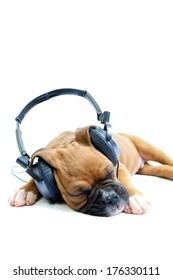 Boxer puppy wearing headphones