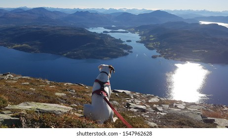 Boxerdog and an amazing view