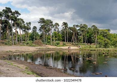 boxtel, noord brabant, netherlands, 07-17-2015, nature reserve Kampina
