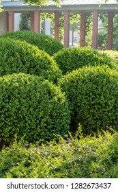 Boxwood balls cut into shape in front of an arcade aisle