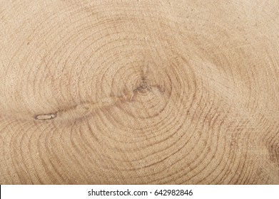 Boxwood slice with annual rings wooden textured background.