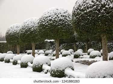 Boxwood and yews under the snow. French garden (France)