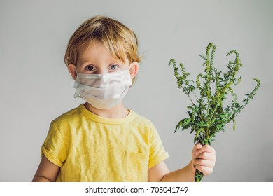 The boy is allergic to ragweed. In a medical mask, he holds a ragweed bush in his hands. Allergy to ambrosia concept..
