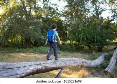 A boy with a backpack walks along the trunk of a fallen tree, a child walks through the forest, a kid is exploring nature, a boy learns to keep his balance.