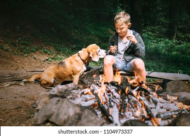 Boy with beagle dog have a picnic near campfire on forest glade