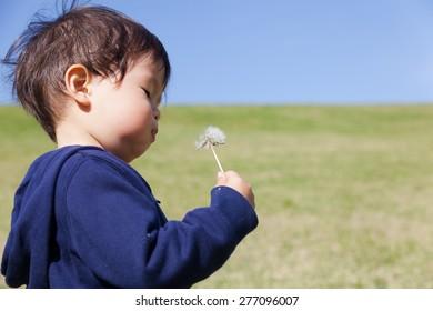 a boy blowing dandelion