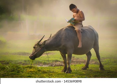 Boy with buffalo in the countryside of Thailand.A boys riding buffaloes and reading a book for education.