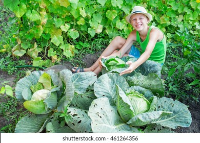 Boy with cabbage in the garden