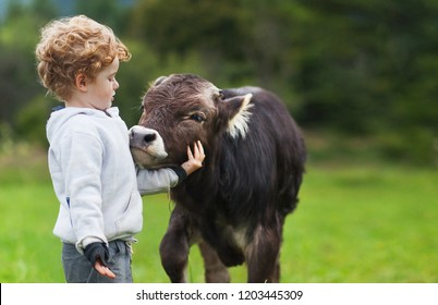 boy and calf on the field, curly ginger hair, brown bull, spring summer morning, a cow and a cowboy, herdsman, child and cattle mammal on a background mountain valley colors greenery, best friends.