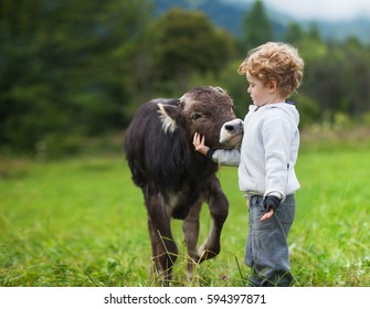 boy and calf on the field, curly hair, brown bull, white caucasian face, spring summer morning, green background