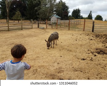 boy child looking at miniature donkey with poop