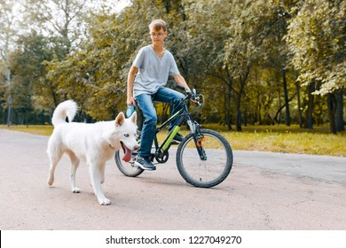 Boy child on a bike with white dog husky on the road in the park.