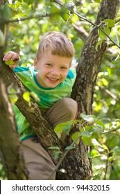 the boy climbed up a tree
