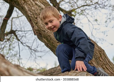 A boy climbs and balances on branch on a tree in the park.