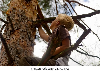 A boy climbs a tree in the forest.