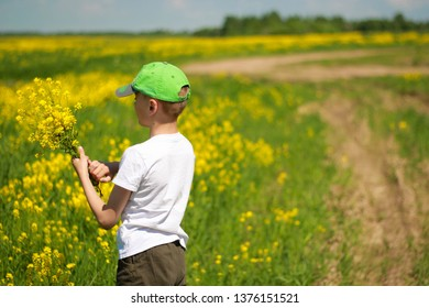 The boy collects flowers in a yellow field.