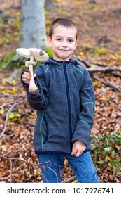 Boy collects mushrooms in the forest.