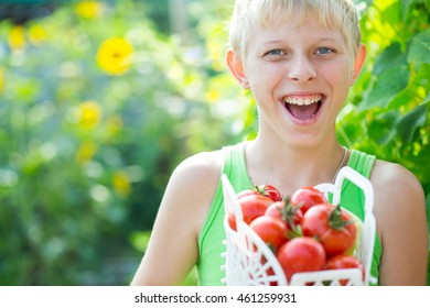 Boy with a crop of tomatoes in the garden