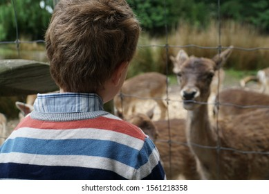 Boy with a deer at a petting zoo in Christchurch, New Zealand.