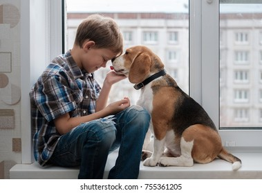 boy European appearance and Beagle dog sitting on the windowsill in the apartment house