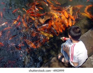 A boy feed goldfish