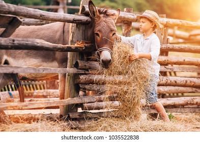 Boy feeding a donkey with hay on the farm