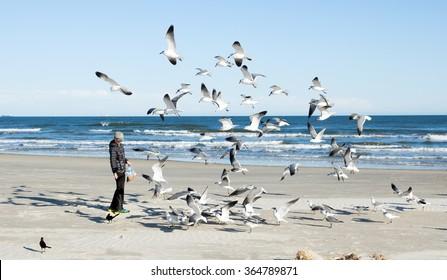 Boy feeding gulls on the beach. Gulf of Mexico, Texas, USA