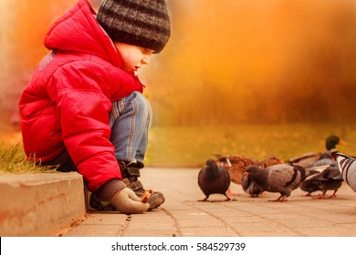 Boy feeding pigeons in the park. happy kid outdoor