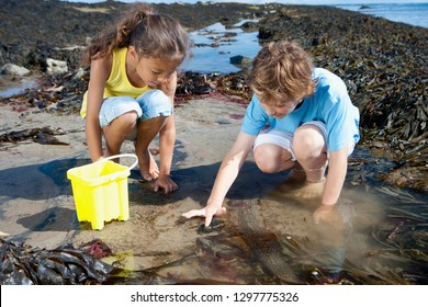 Boy and girl exploring in rock pool on summer beach vacation