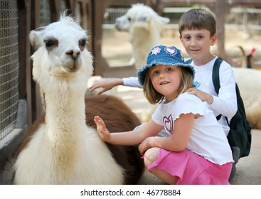 Boy and girl palm a young Lama in a zoo