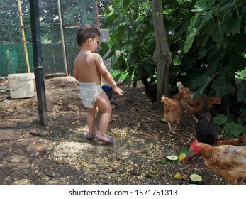 A boy giving food to some chickens.