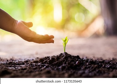 Boy hand plant a tree.Seedling are growing with backdrop of the sunlight.Planting trees to reduce global warming.
